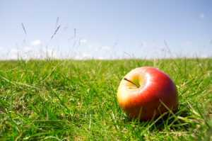 red apple in a field