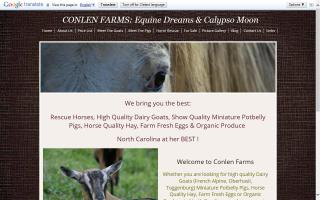 Conlen Farms: Equine Dreams & Calypso Moon
