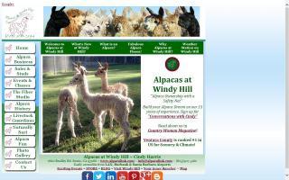 Alpacas at Windy Hill