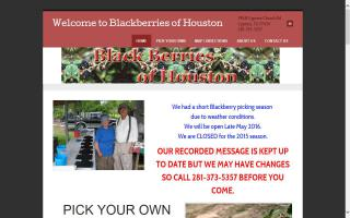 Blackberries of Houston