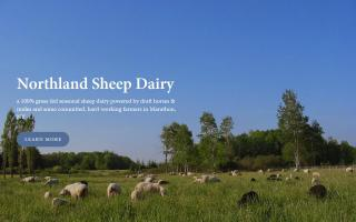 Northland Sheep Dairy